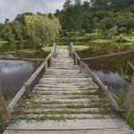 bvuma mountains botanical resort attractions