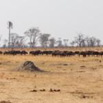 wild animals found in hwange national park
