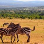 matetsi safari area