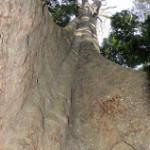 chirinda forest zimbabwe