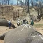 picture of hwange elephant poisoning