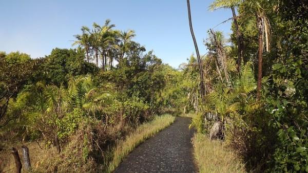 rain forest vicfalls