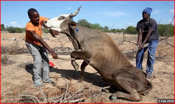 zimbabwe drought picture 2016